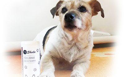 Minden, amit a száraz kutyasamponról tudni érdemes