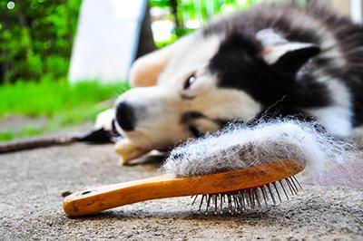 Találd meg a tökéletes kefét a kutyád szőrének ápolásához!