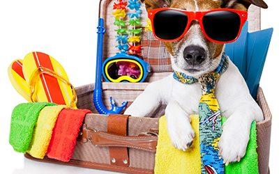 Nyaralni indulunk: vagy mégis jobb a kutyának, ha itthon marad?