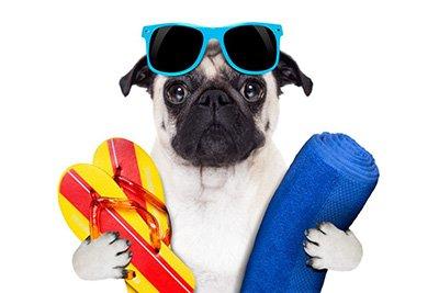 Kutya meleg van! 5 dolog, amire érdemes gazdiként figyelni a kánikulában